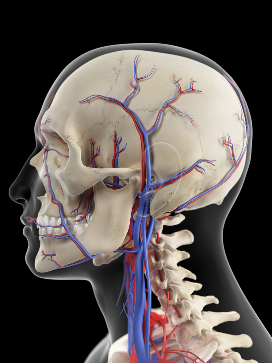 Internal Jugular Veins